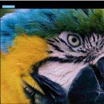Download Stepok Picture Enlarger 3.1 – Phóng lớn ảnh